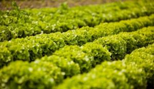 Investir dans l'agroalimentaire pari sur l'avenir